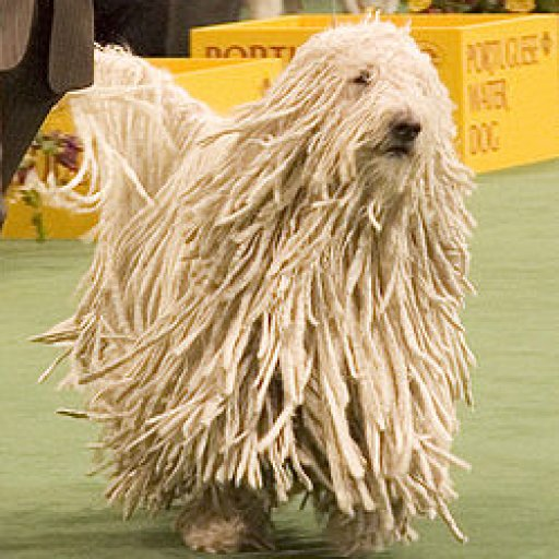 250px-Komondor_Westminster_Dog_Show_crop