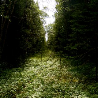 i love the woods