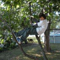 """Tree surfing"""