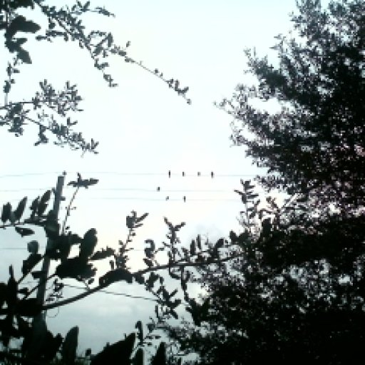 look at the birds :D