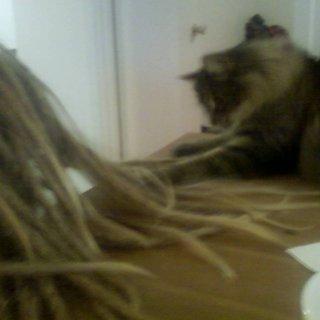 kitteh+ dreads= NOM