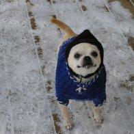 Taquito in the snow