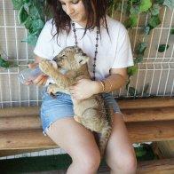 luca the lion cub!
