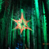 Sherwood Forest (13)