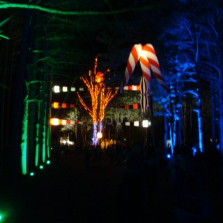 another great shot of the sherwood forest