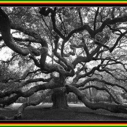 TREE HUGGERS & LOVERS